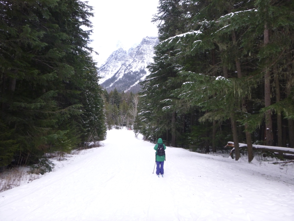 A solo trip into the woods of Glacier National Park...
