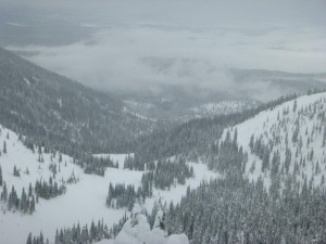Whitefish_looking_down