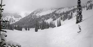 Powder as far as they eye can see at Whitewater. Image taken by Doug Zwick