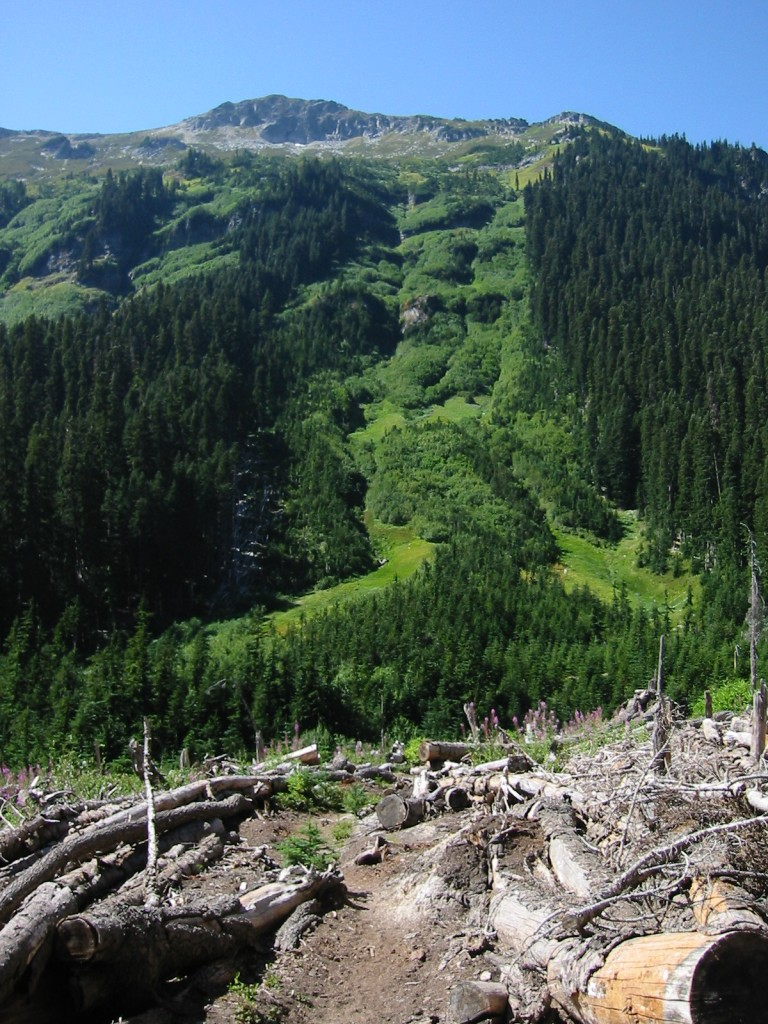 An example of a prior avalanche path with woody debris in foreground - Image taken by Walter Siegmund