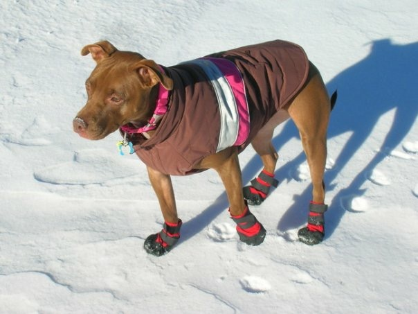 Dog boots to protect feet from cuts.