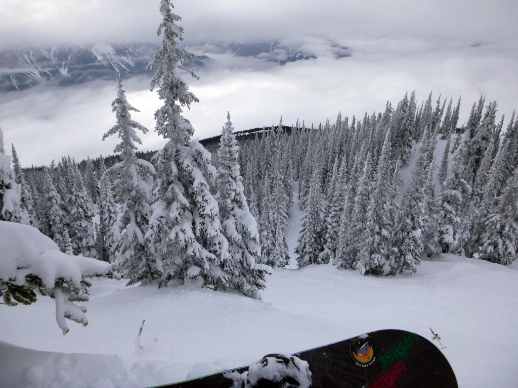 Image taken by - Local Freshies