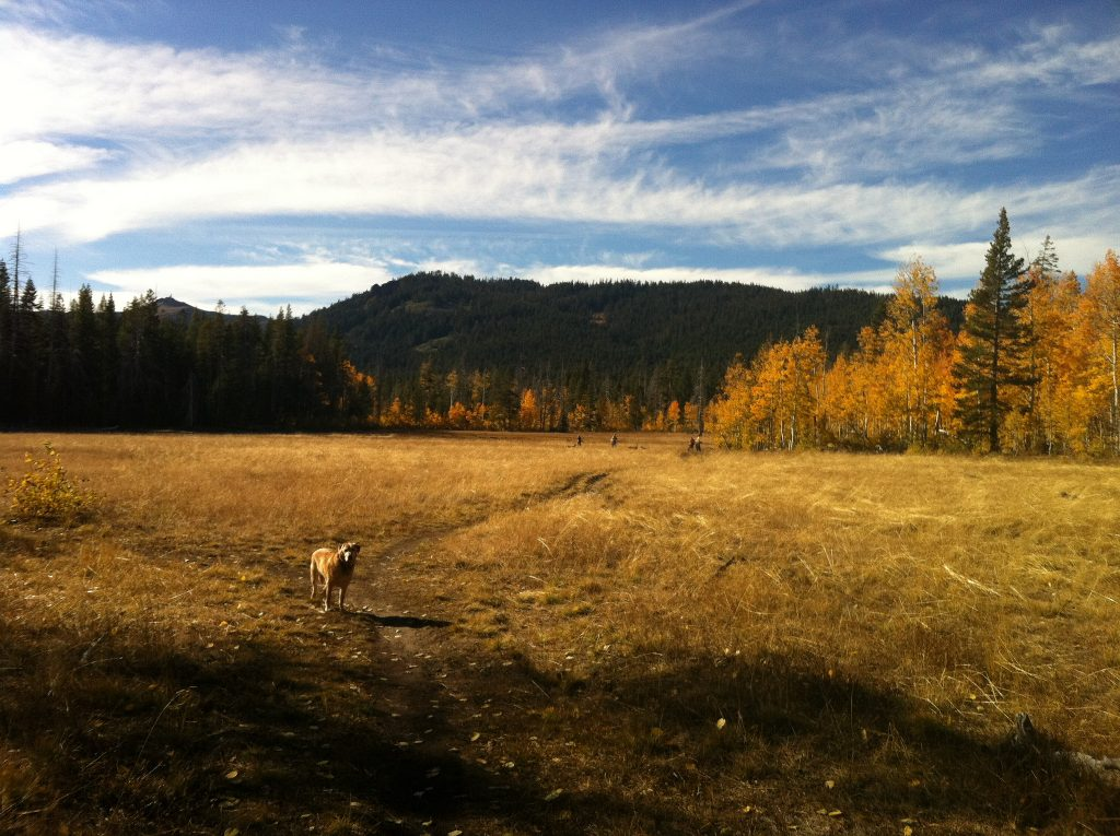Tucker out for a hike. Image taken by: Chip Roberson