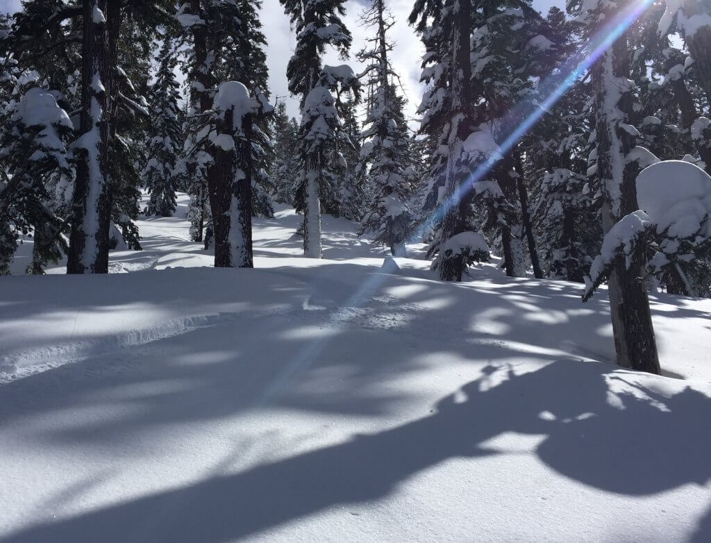Ponderosa Trimmer Peak Powder Snowfall