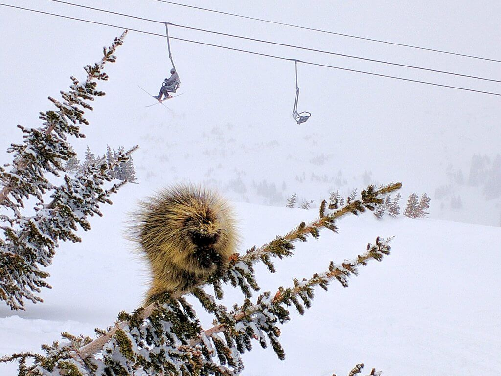 Loveland Pass Colorado best spring skiing Porcupine