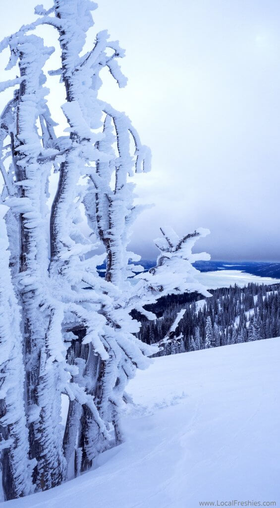 McCall Donnelly Idaho Tamarack Ski Resort Tamarack tree winter