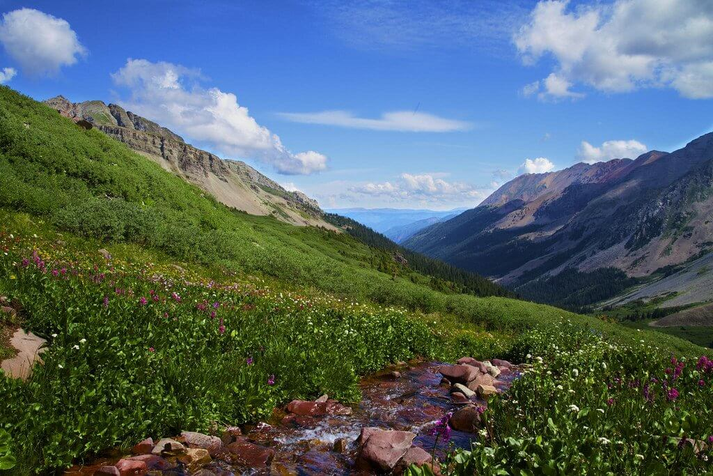 Crested Butte Wildflowers Hiking Bouquet