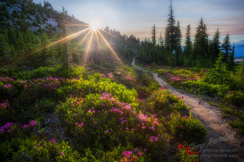 best places to see wildflowers Mt Hood moonlight colorful spring summer hiking