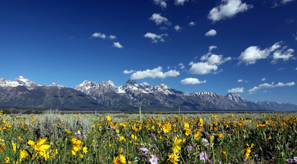 best places to see Wildflowers Jackson Hole The Hole Picture Safaris