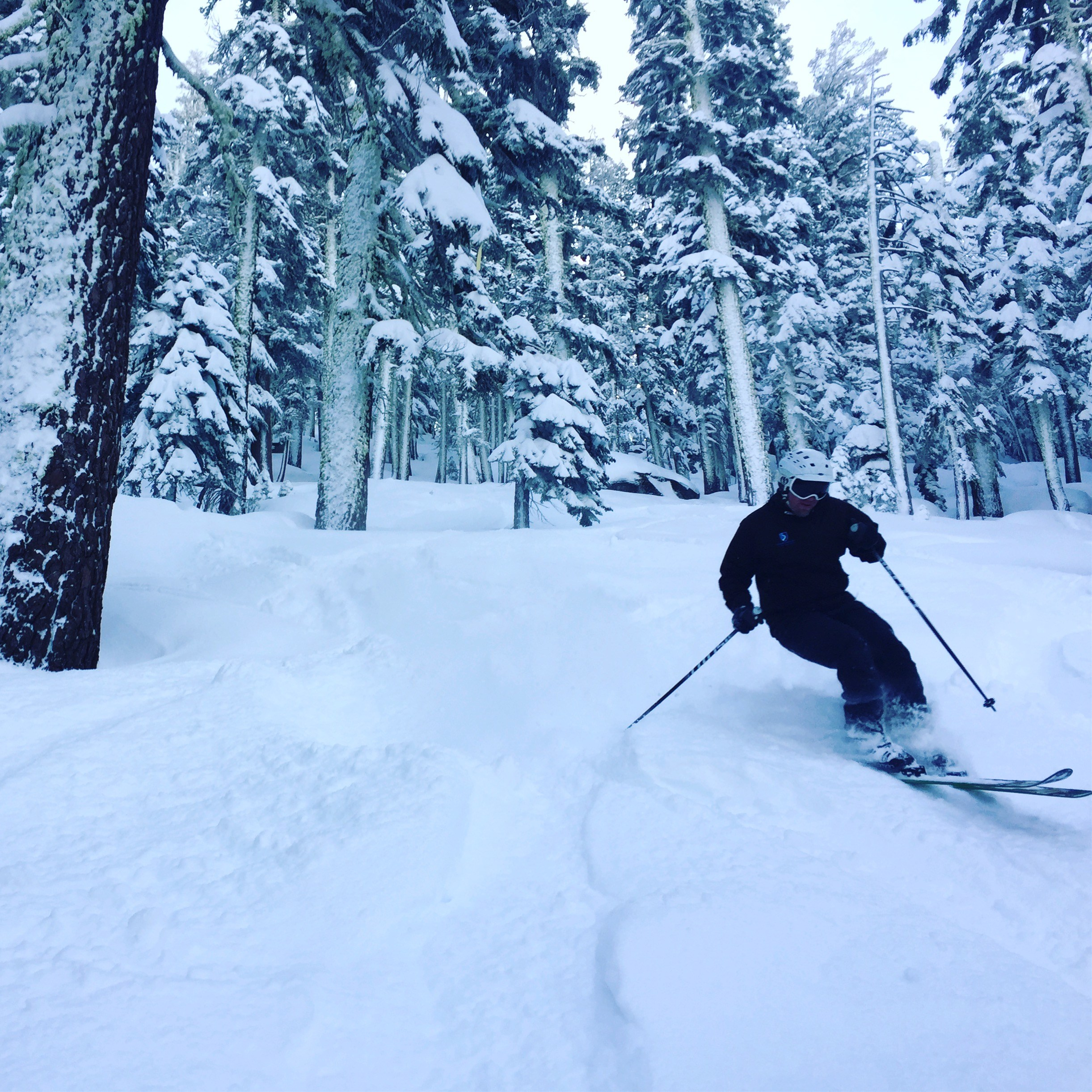 Sierra at Tahoe powder tree skiing