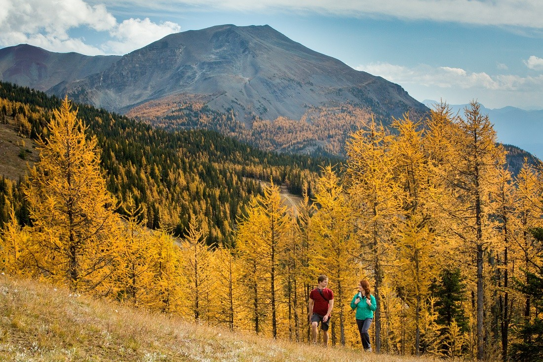 Larch Valley best Fall Foliage in the western US & Canada