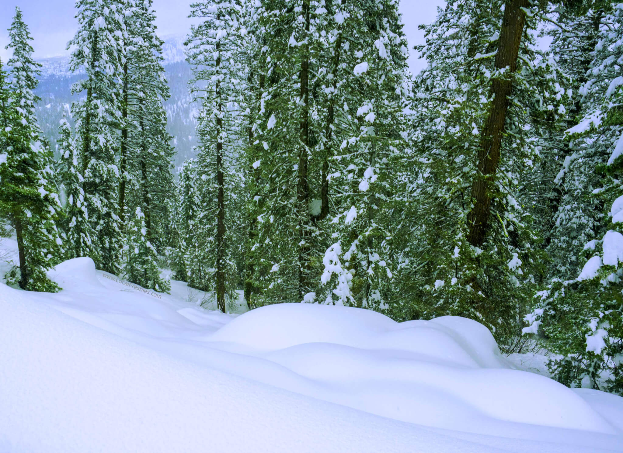 Backcountry skiing & snowboarding in the Payette National Forest near Brundage Resort by McCall Idaho