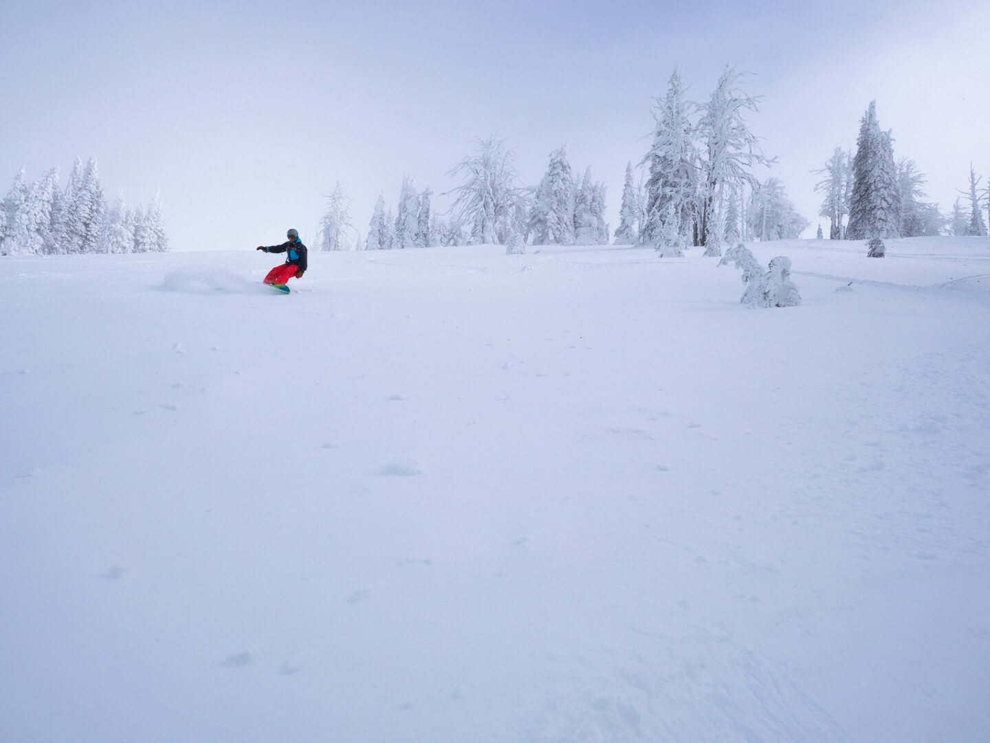 Snowboarder carving powder at Brundage Mountain near McCall Idaho with ghost trees