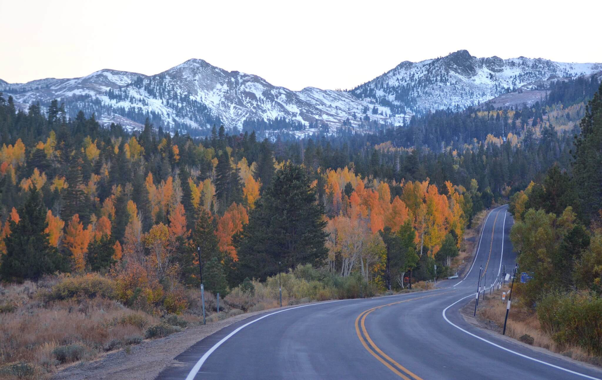 fall foliage in Hope Valley near Lake Tahoe California