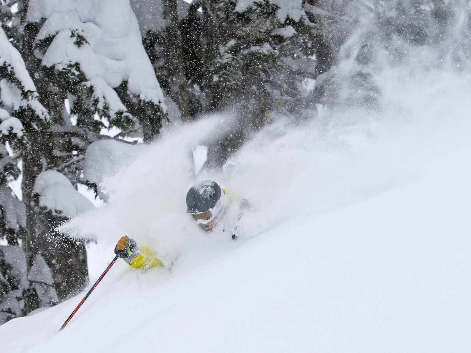 skiing powder that is neck deep